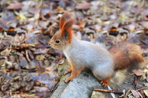 San Antonio Squirrel Removal